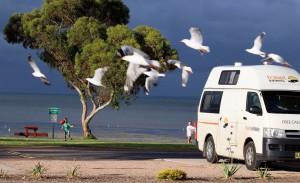 pr parer votre voyage australie archives campervan hire australia travelwheels. Black Bedroom Furniture Sets. Home Design Ideas