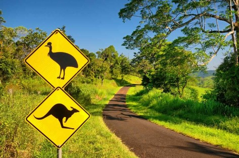 Atherton Tablelands - Watch out for kangaroos and cassowaries!