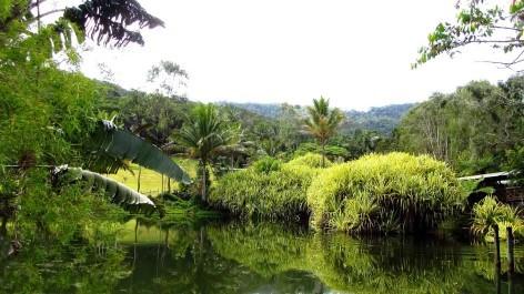 Botanic Gardens in Cairns