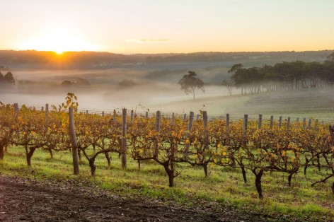 Hunter Valley - Beautiful wine region!