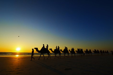 Port Stephens - Camel tour at sunset