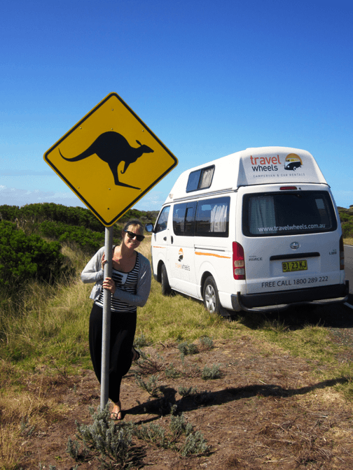 Kangaroo road side photo with campervan in the background