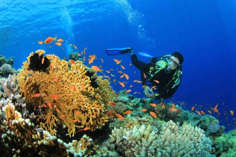 Top 10 Activities in Cairns: Dive the Great Barrier Reef