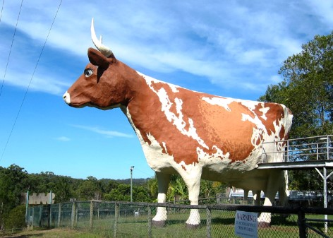 The Big Cow in Yandina