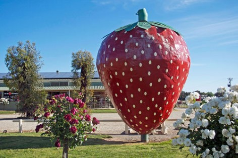 The Big Strawberry