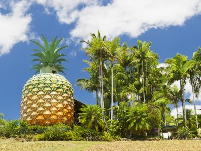 The Big Pineapple in Australia
