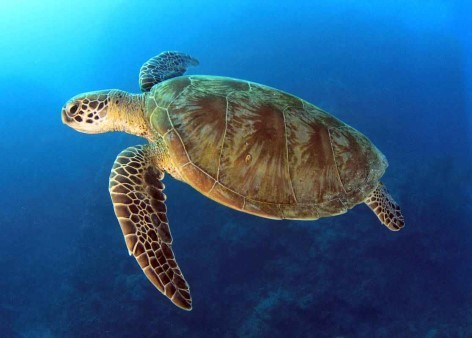 Watch wild sea turtles