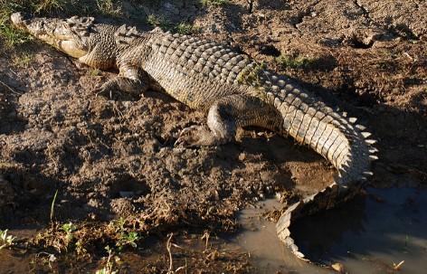 Warning: Crocodiles in Kakadu National Park