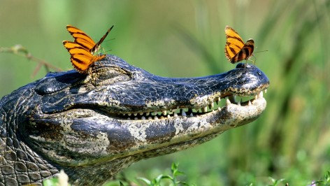 Crocs are not always as cute as they appear here.