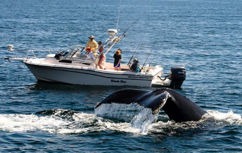 Whale watching is one of the most popular things to do for tourists and locals alike