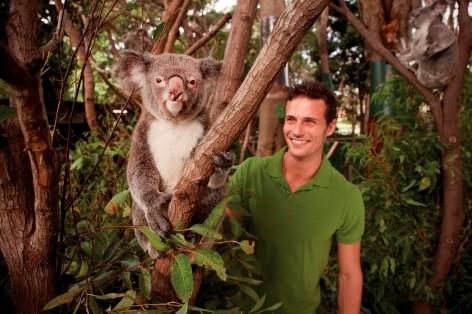 Visit the Koala Conservation Centre