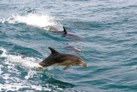 Swim with dolphins on your Melbourne to Phillip Island tour