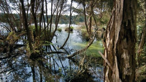 French Island offers fine mangrove and bushland walks