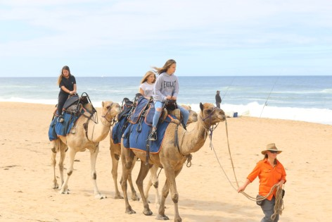 Lakes Entrance Beach Camel Ride