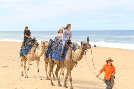 Lakes Entrance Beach Camel Ride