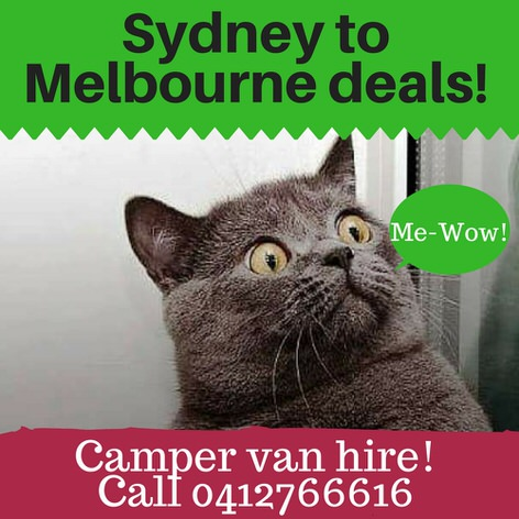 Picture of a cat in amazement about our sydney to melbourne campervan hire deals!